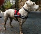 Laufen mit Hund (Westerwald)