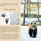 Bären im Baltikum – was mache ich wenn?…