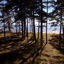 Küstenwasserwege bei Salcgriva, Lettland