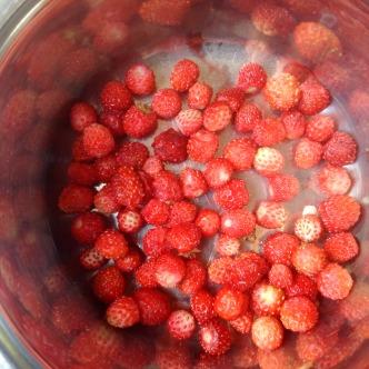 Wilderdbeeren in Estland